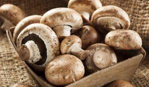 razones-para-comer-hongos-medicinales