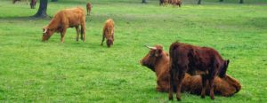 carne-ecologica