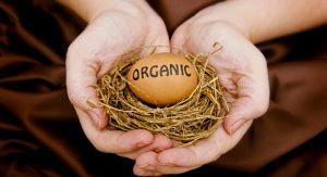 huevos-ecologicos-3